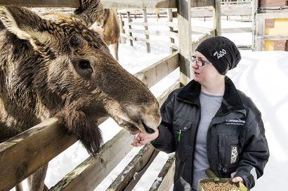 """""""Eläimet ovat nyt lomamoodissa"""" –Ranuan eläinpuisto sulki ovensa vierailta, mutta eläinten arki rullaa entiseen malliin"""