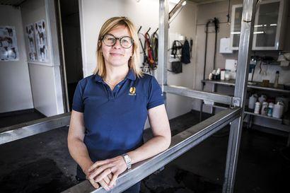 Koirien terveys- ja kisatiedot koostava mobiilisovellus suunniteltiin Rovaniemellä – sovelluksen toivotaan tuovan läpinäkyvyyttä lemmikkien omistajille ja kasvattajille