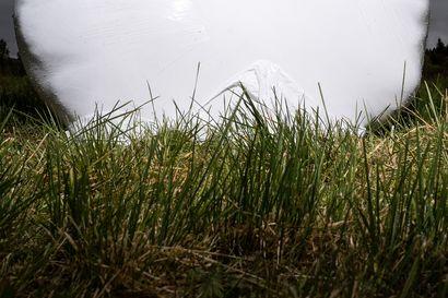 Urakoitsija ajoi traktorin pellon laitaan ja se upposi 15 senttiä– märkien suopeltojen lisäksi koko rehusato uhkaa jäädä taas huonoksi