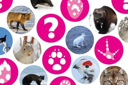 Mikä tästä meni? – Testaa, osaatko yhdistää eläimen ja jäljen