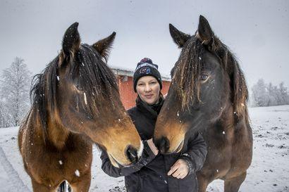 Syrjälänpellon hevostilaa pyörittävä Sari Vesala on varsinainen renessanssinainen – hän hieroo, kengittää, valmentaa, ohjastaa, kasvattaa ja kuntouttaa hevosia