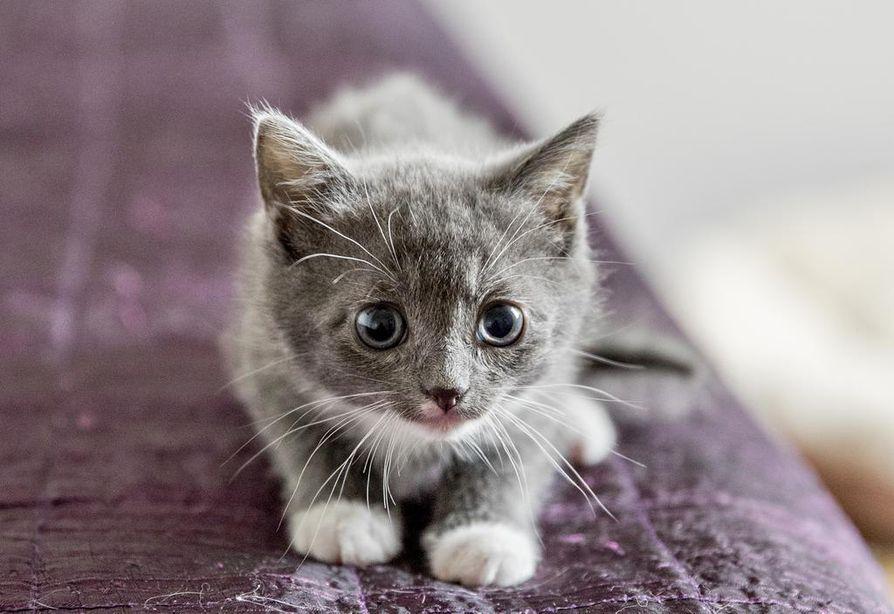 Varsinkin kissat ovat altistuneet alfakloraloosia sisältävälle jyrsijämyrkylle.