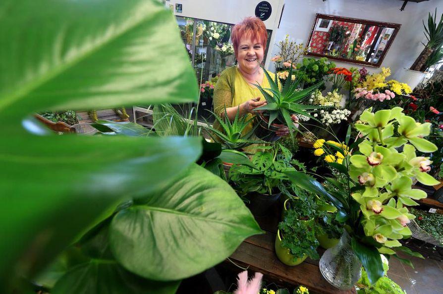 Kukkakauppias Lea Tuomimäki kertoo, että viherkasveista haetaan nyt luonnetta ja persoonallisuutta. ¿Ne saavat olla vähän vinoja tai käppyröitä.
