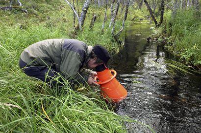 Raakkuja sinnittelee salaisilla puroilla – Posion uudet löydöt koostuvat pääosin vanhoista yksilöistä