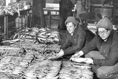 Vanhat kuvat: Hätälän kalakauppiasveljekset 80-luvun Oulussa – talvikalastusta ja Hailuodon Siikamarkkinat