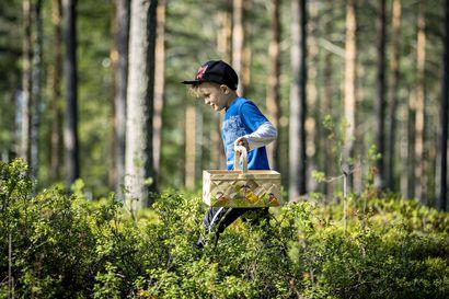 7-vuotias utajärveläinen Juhani Isokangas viihtyy sienimetsässä joka päivä ja myy saaliin hyvällä rahalla kaupunkiin – katso video asiantuntevasta sienestäjästä, jonka iltasatukin on sieniopas