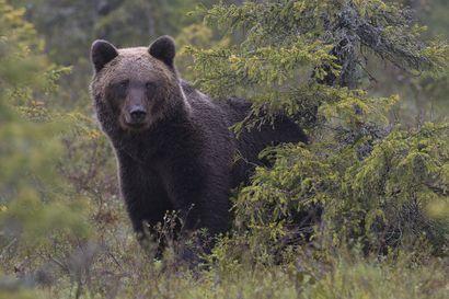 Suunnitteletko kiertäväsi Karhunkierroksen tänä kesänä? Nappaa tästä vinkit vaelluksen suunnitteluun!