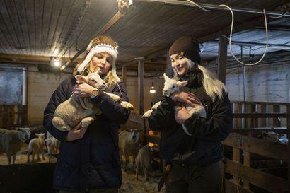 Nuoret rohkeat naiset ottavat lampaat hoitaakseen tiloilleen – Uskoa riittää lampurin ammattiin, vaikka yhteiskunta ei alaa liiemmälti suosi