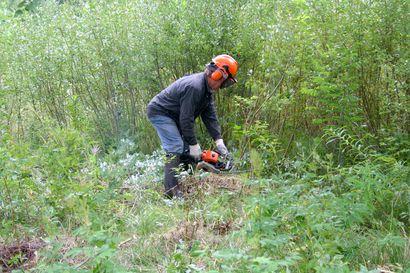 Metsäryhmän perustaminen äänestytti Pudasjärven kaupunginhallituksessa – päätettiin hankkia Livokkaalta 67 800 eurolla