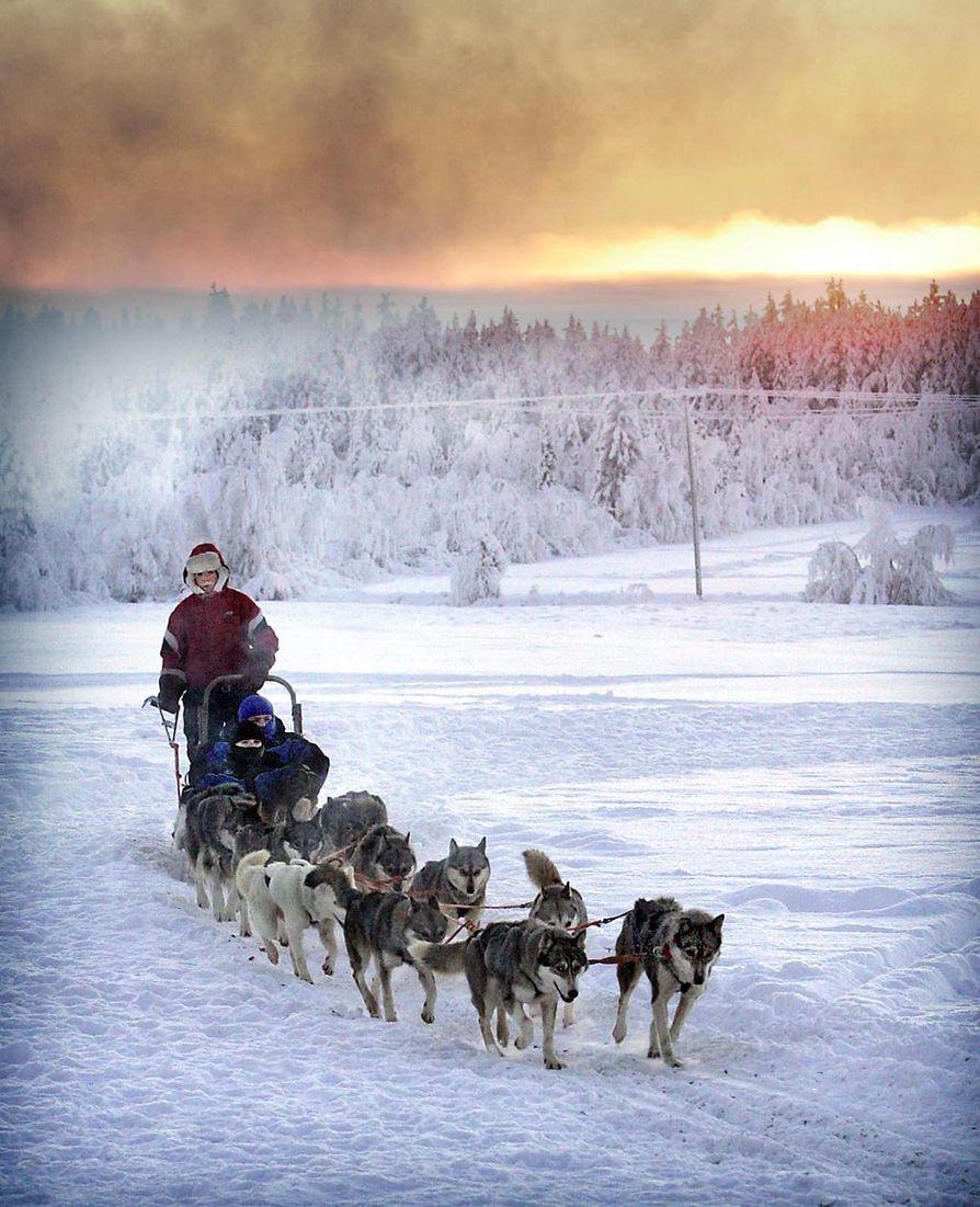 Tunturitaivaan kajo valaisee Reijo Jääskeläisen koiravaljakon vettämää ajelua