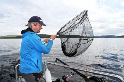 Hauet valtaavat Inarijärven – Uistelukisassa petokalaa nousi sata kiloa viidessä tunnissa