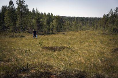 Sotkamolaisyritys perustaa lähes sata marjojen ostopistettä ympäri Suomea – päätöksen taustalla ulkomaisen työvoiman puute