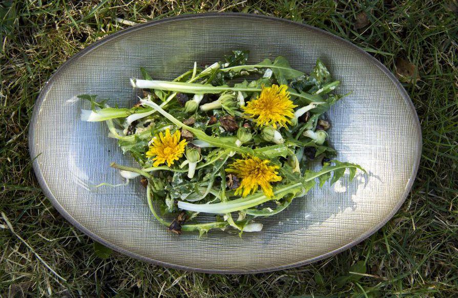 Voiko tästä keväinen salaatti parantua? Aurajuusto taittaa juuri sopivasti voikukan kirpeyttä ja mintunlehdet tuovat salaattiin lisää makeutta ja raikkautta.