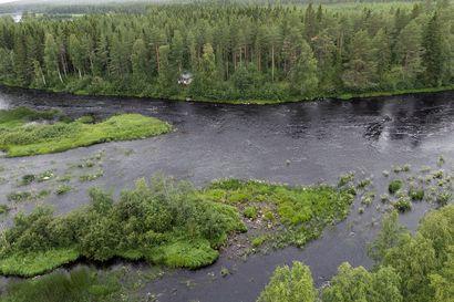 Kiiminkijoki virtaa villinä ja vapaana – Sen varrelta löytyy Alavuoton kylä, koskia ja tinkimätöntä tekemisen meininkiä