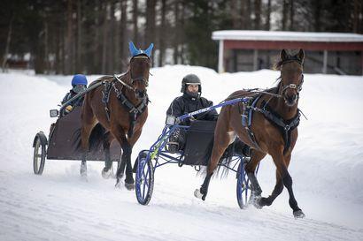 """Pasi Pohjola vaihtoi pesäpallovarusteet ohjaksiin ja harrastaa raviurheilua suurella sydämellä – """"Aluksi käskin tyttöjä viemään haisevat hevoshaalarit kartanolle"""""""
