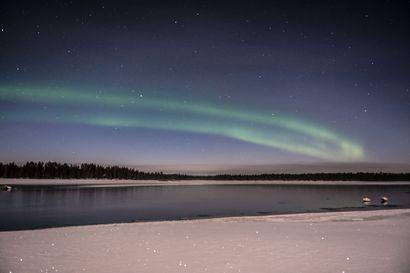 Kuva: Kaksi joutsenta talvehtii Kuusamossa revontulien alla – eikö niille tule kylmä?