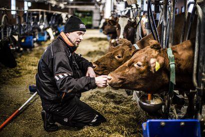 Maitotilat eivät suostu ilmaston pilaajiksi – alhaista hiilijalanjälkeä on tarkoitus alentaa vielä lisää