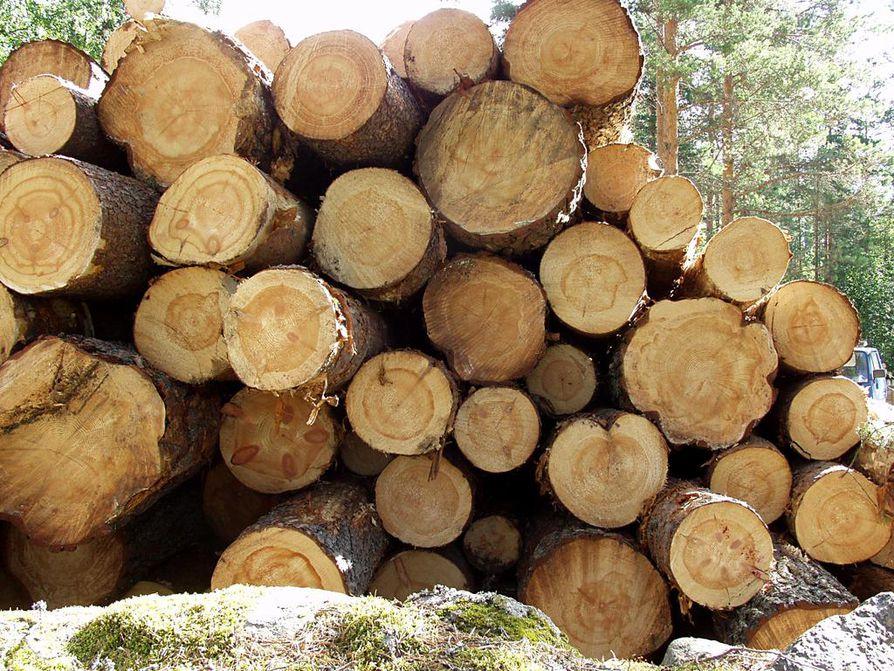 Arkistokuva. Kuvan puut eivät liity uutisen tapaukseen.
