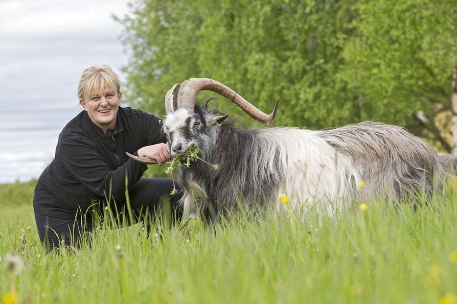 Pirkko Mattila pitää vuohia lemmikkeinään. Vuohenjuustolle tuoksuvat eläimet toimivat Mattilan mukaan hyvinä ruohonleikkureina mutta syövät suunnilleen kaikkea, mitä eteensä saavat.