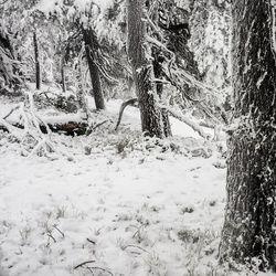 """Metsien vuotuinen kasvu laski tuoreimmassa valtakunnan metsien inventoinnissa – LUKE: """"Tarvitaan lisätutkimusta männyn kasvun alenemisen syistä"""""""