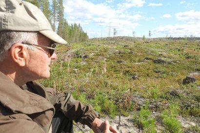 Metsiin hakatut kymmenien hehtaarien aukot harmistuttavat Rokualla – metsälaki ei määrittele avohakkuun suurinta sallittua kokoa