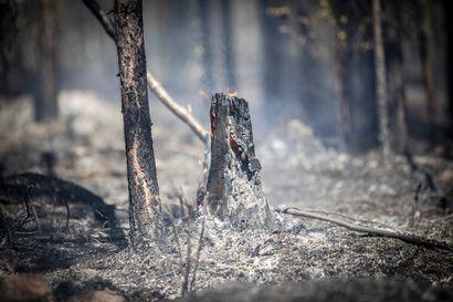 Saderintama sammutti Urho Kekkosen kansallispuistossa syttyneet kolme maastopaloa – Jälkisammutustyöt jatkuvat keskiviikkoillan ajan