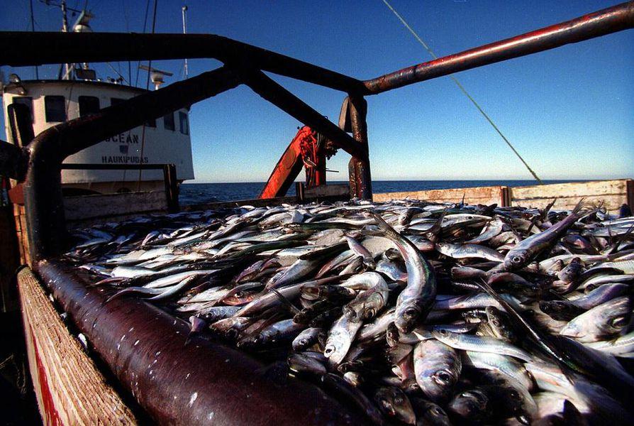 Troolikalastus