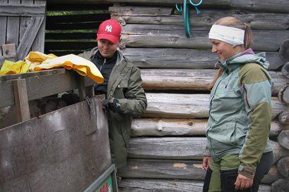 Lampaat pulleita, lampurit tyytyväisiä  – Metsähallituksen kesäpaimenten savotta ohi