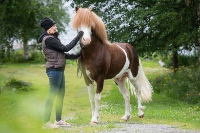 """Talliyrittäjä Mirva-Kristine Varpa haluaa muuttaa islanninhevosiin yleisesti liitettyä mielikuvaa: """"Usein ajatellaan, että issikka olisi hevonen, joka soveltuu ainoastaan vaelluskäyttöön"""""""
