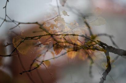 Repiikö voimakas lounaistuuli ruskan? – syksyisistä sumuista ja kuurasta vasta ensimakua