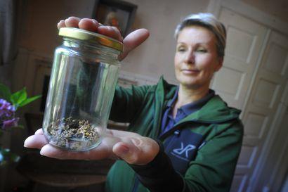 Tanja Karpela koirineen etsi liito-oravan merkkejä Sotkamon Palovaarassa –  Metsähallitus aloittaa metsänkäsittelyn alueella