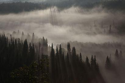 """Tauno Kohonen kuvaa, koska kokee olevansa sen luonnolle velkaa – """"En voi kuvitella, että voisi enää taivaallisempaa olla"""""""