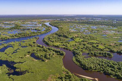 """Tshernobylin saastuneen maa-aineksen kaivaukset herättävät pelkoa – Vaarassa on myös """"Euroopan Amazon"""""""