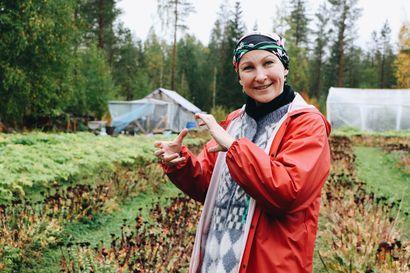 Arctic Warriors avaa kasvimaansa vierailijoille –tarjolla tietoa Lapin voimayrteistä