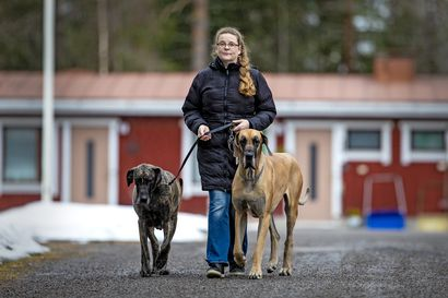 Pysähdy oikeasti miettimään parikin kertaa ennen kuin ostat koiranpennun –sirutuksen toivotaan estävän pentutehtailua