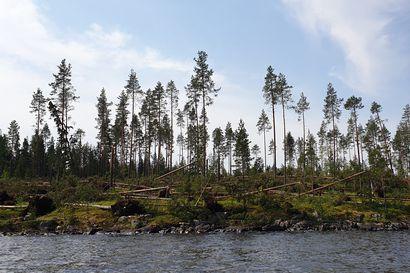 """Kainuun raivoisan ukkosen kokenut Antti Toivanen: """"Se oli kuin pyörremyrsky"""" – katso hurja video Sotkamosta"""