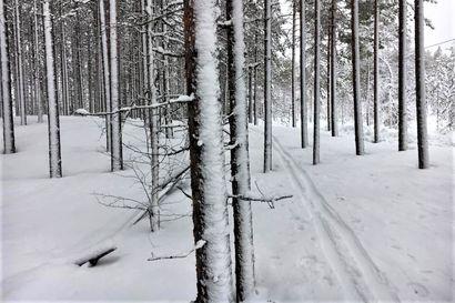 Vitivalkoisella lumella liukuen – Liukulumikenkäillessä on helppo pysähtyä ihailemaan luonnon kauneutta