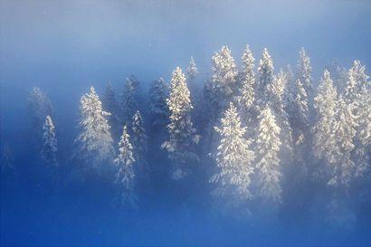 Lukijoiden sääkuvien marraskuun voittajakuvassa yhdistyvät valo, luonto ja hetki –Talvi ja siniset tuokiot näkyvät myös muissa lukijoiden kuvissa