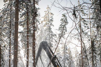 Lukijalta: Nykyinen ja tuleva metsämme