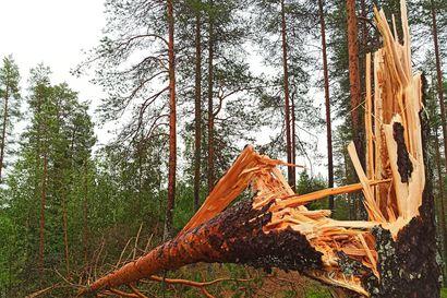 Lukijat kuvasivat myrskyn tuhoja ja ukkosta – katso kuvat kaatuneista puista ja salamoinnista