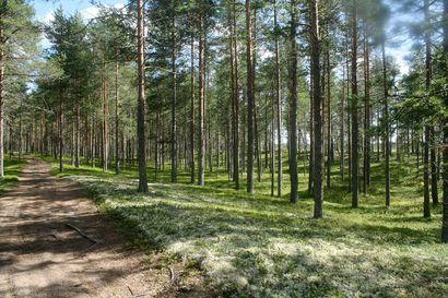Metsätilojen myynti kiihtyi alkukesästä – hinnat ovat nousseet myös Pohjois-Pohjanmaalla