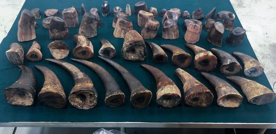 Kiinan viranomaiset löysivät huhtikuun alussa salakuljetuserän, josssa oli 82,5 kiloa sarvikuonojen pilkottuja sarvia.