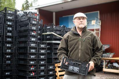 Laatikot ovat jo valmiina tattikaupoille, puolukkaa  huonohkosti – hillasadosta pelkästään yhdeltä ostajalta 150000 euroa Koillismaalle