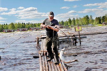 Lohi alkoi uida kalastajien lippoihin lippokauden alusta lukien – Kylttikiistaan ei yksiselitteistä linjausta