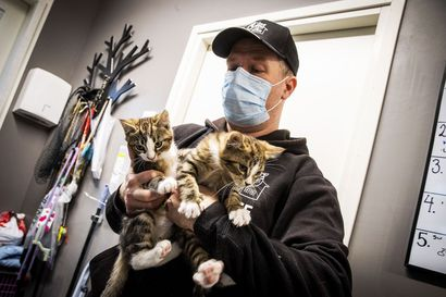 Kissanpennut kelpaavat, aikuiset eivät – Rovaniemeläinen eläinhoitola on saanut yli 90 yhteydenottoa löytölässä olevista pennuista