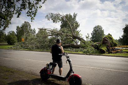 """Myrskyn tuhoja raivataan Oulussa pitkään, syöksyvirtaus kaatoi myös Raatin suuren poppelin – """"Myrsky kaatoi puita ryppäissä, hurjalta näyttää"""""""