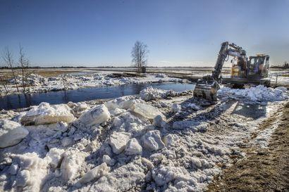 """Tyrnävän tulvatilanne on hellittämään päin – """"Vesi kulkee uomassa ja sen pinta on laskenut 40 senttimetriä eilisestä"""""""