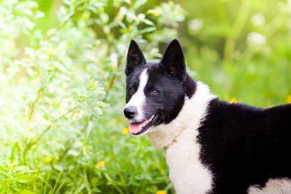 Pidä nyt koirat ja kissat kiinni – luonnossa eletään pesimisaikaa