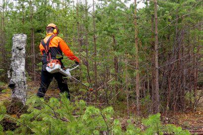 Metsäala kutsuu uusia osaajia – Vetääkö metsä sinua puoleensa?