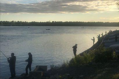 Tunteet kuumenevat lohenkalastuksen tungoksessa Oulussa: Vuorokalastusta väläytetään, kieltojakin esillä